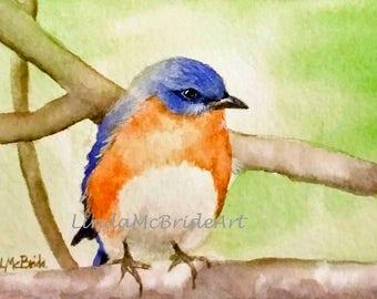 Eastern Bluebird on Limb 5x7 Blank Notecard with Envelope