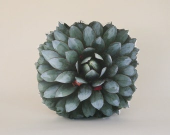 Succulent pillow : Agave Blue Glow