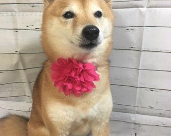 Pink Dog collar flower