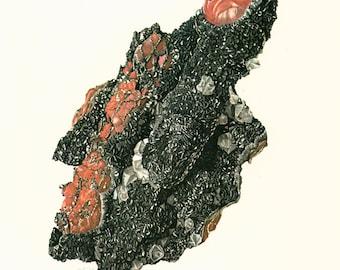 1970 Illustration Hématite Rouge Noire Planche Originale Pierres Mineraux Roches Cristaux. Geologie. Decoration murale.
