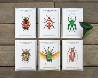 Beetle postcards pack of 6 · natural history vintage print