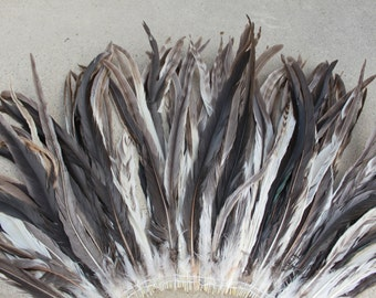 Chinchilla rooster coque tails 13-16 inch length Tahitian costumes, rooster tail feathers, striped feathers