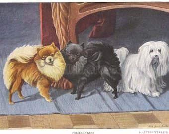 1919 Print Pomeranians and Maltese Terrier by Louis Agassiz Fuertes