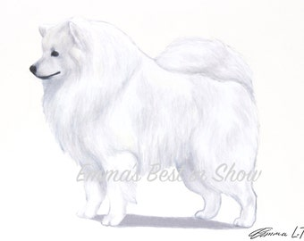American Eskimo Dog - Archival Fine Art Print - AKC Best in Show Champion - Breed Standard - Non-Sporting Group - Original Art Print