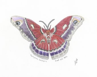 Butterfly Art Print, Colored Pencil Butterfly Print, Butterfly Drawing, Giant Silk Moth Print