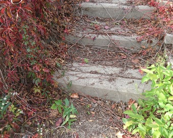 Old Outdoor Stair With Cascading Red Vines and Berries Print or Backdrop