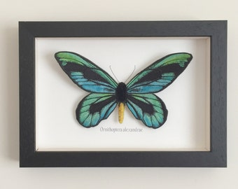 3D butterfly picture, Embroidered and hand painted fabric butterfly in black wooden box frame- Queen Alexandra's Birdwing butterfly