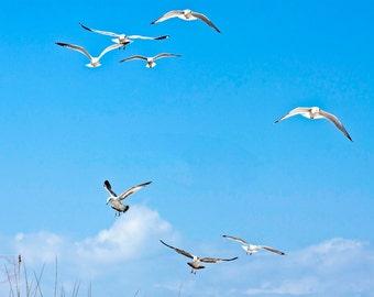 Seaside Beach Decor Minimalist Seagulls Flight - Fine Art Photograph Print Picture