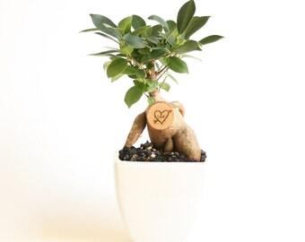 Little Bonsai Love Tree, Personalized Valentine's gift