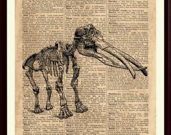 Mastodon Skeleton Print, Anatomical Print, Animal Wall Art, Animal Anatomy, Skeleton Print, Animal Skeleton, Animal Art