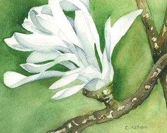 Star Magnolia - Original Watercolor Artwork
