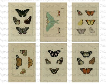 Vintage Butterfly Digital Download Collage Sheet  B 3.5 x 2.25 Inch