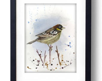 Robin Bird Watercolor