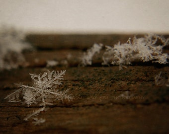 Snowflake Fine Art Photography Nature Rustic Winter Snow Flake White Brown Wood Warm Tones Neutral Christmas Macro Home Decor Wall Art