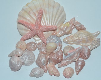 Natural colored sugar paste seashells set of 25