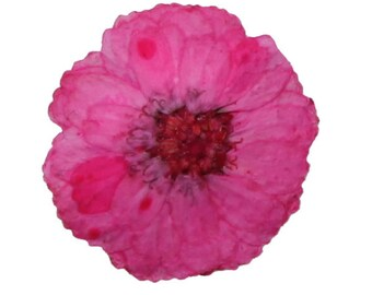 Pressed flowers, small pink chrysanthemum 20pcs, floral art, craft, card making, jewellery making
