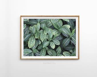 Foliage print - Tropical botanical print - Green photography foliage - Tropical wall art - Botanical print - Printable wall art