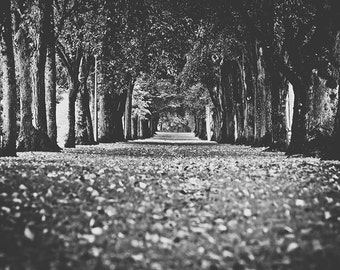 Black and White Film noir Tree lined Corridor Photographic Art Print, Wall Art for Home decor,