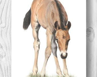 "Giclee Art Print - ""Bracken"" the New Forest foal"