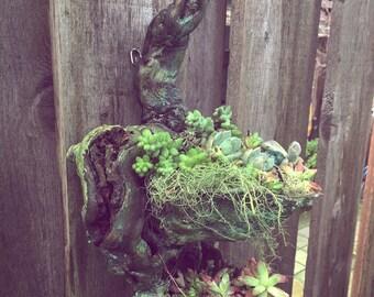 Tear drop. Made to order Driftwood succulent vertical garden sculpture