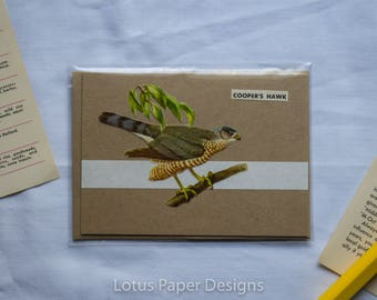 Stationery - Handmade Blank Greeting Card (A1/4-Bar) - Cooper's Hawk - Golden Guide to BIRDS