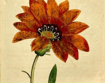 Flower print art, Nature decor, Antique print, Flower art, Vintage print, Vintage poster, 90