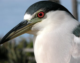 A Charming California SEAGULL Closeup.  Blank Greeting card. Fine Art Photo. Suitable for Framing. Copyright Protected
