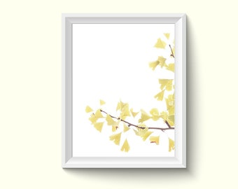 Ginkgo Leaves Photography Poster Art Print P243