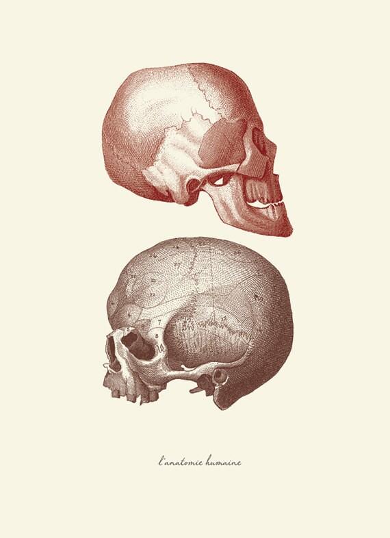 Vintage menschliche Anatomie Schädel L \'