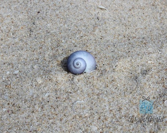 Blue Seashell Photo Print Digital Download, Beach Art, Seashell Beach, Seashell Photograph, Coastal Decor, Beach Theme, Beach Decor