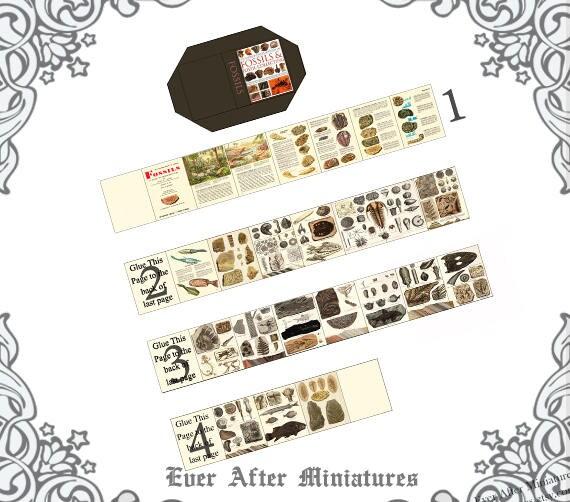 FOSSILS Dollhouse Miniature Book