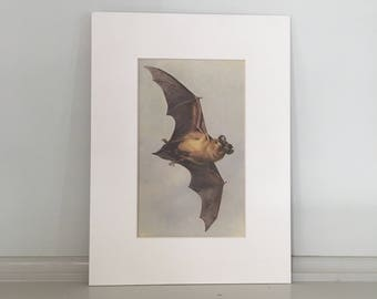 1960 mini flying bat original vintage lithograph print - crop from a larger print