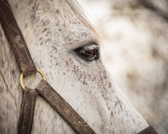 Watchful Eye, 3Butterflies Photography, horse stable, white horse, pasture, horse eye