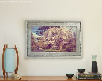 Art Print - Christchurch Botanic Gardens, Spring Blossom Photo