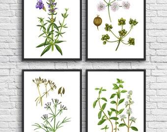 Set of 4 Green Plant Prints, Antique Botanical watercolor Art Posters, Botanical Decor, Plant Book Plate Illustration, green room decor. #6