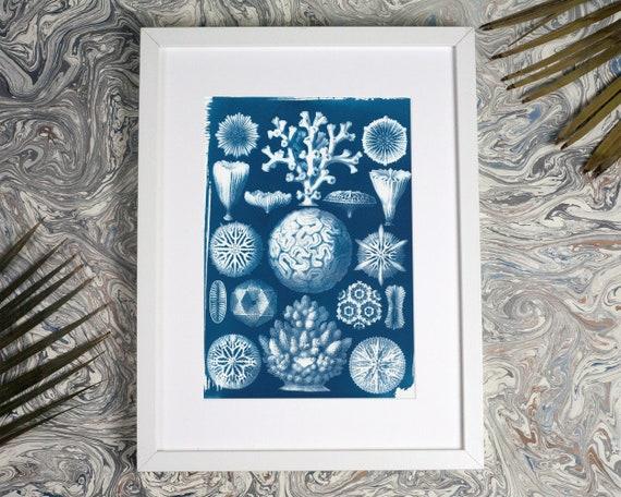 Geometric Coral Drawing by Ernst Haeckel, Cyanotype Print, Nautical Decor, Ocean Print, Sea Coral, Geometric Art, Botanical Print, Beach Art