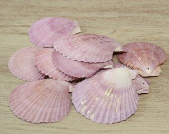 Natural Seashells, Drilled, Beach Decor, Craft Supplies, Nautical Ocean Coastal Wedding craft, Jewelry supply, Mauve Purple Shells, set of 9