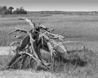 Driftwood 8x10 in Black and White