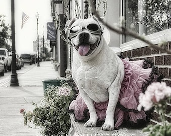 "Maximusbolo's favorite - ""The Mighty Zora Lynn - Beautiful Pibble"" 8x10 Photograph"
