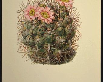 Cactus Print Cactus Wall Art Nature Print Botanical Cacti