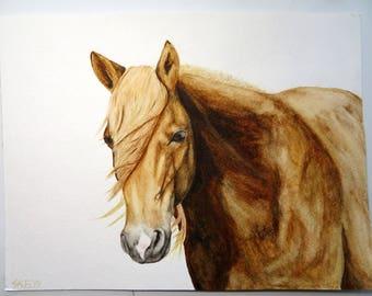 Tuleta's Star- Original Chincoteague Pony Watercolor