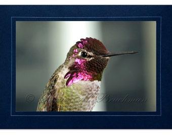 Hummingbird Photo Greeting Card - Bird Card Blank Inside - Blank Hummingbird Note Card - Purple Pink Bird Photo - Anna's Hummingbird Card