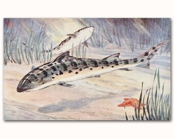 "Shark Wall Art, 1930s Ocean Print (Vintage Fish Artwork) --- ""Leopard Shark"" No. 256"
