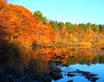 Photo Print - Autumn at Shubie Park