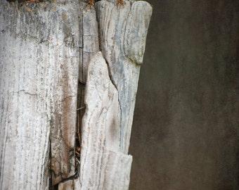 Fence Lizard Photography,Lizard Photo,Reptile Photo,Rustic Photo,Wildlife Photo,Nature Photo,Gray Wall Art,Animal Photo,