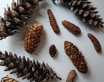 Pinecone Set