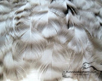 """Real Natural Cruelty Free Feathers Faux Hawk Feathers Black White and Grey Barred Feathers Rooster Feathers For Crafts Qty 30 Size 1.5-2.5"""""""