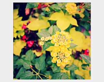 Yellow Lantana Flower Photography, Yellow Flower Art, Cheerful Photograph, Nature Photograph, Yellow Green Red, Garden Photograph