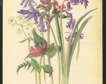 Vintage Nature Scene, Botanical,  Bookplate Illustration, Print for Framing, Red Campion, Wild Hyacinth, Parsley Floral Print, Nature Print