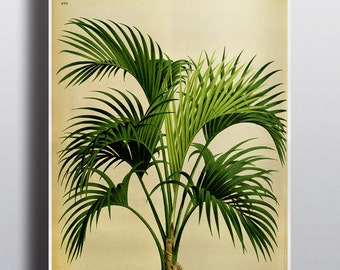 Antique 1800s Palm Tree Print Botanical Print Art Print Wall Decor Wall Art Tropical Home Decor Green Decor Nature Illustration Vintage